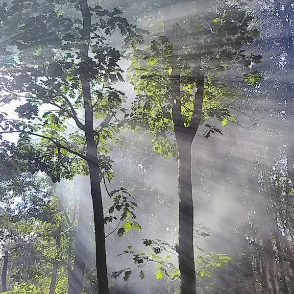 Une vue de dessous des arbres