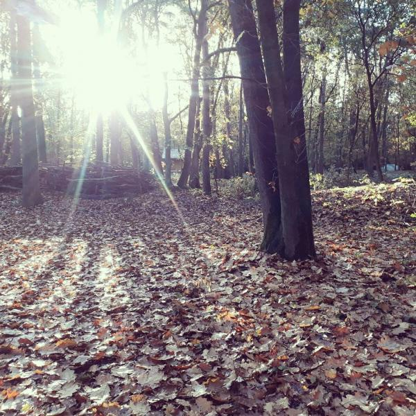 Le soleil brille à travers les arbres